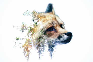 -- Fox blue exposure -- by 0l-Fox-l0