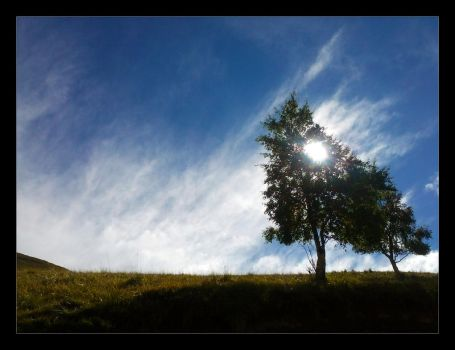The Sun behind the tree by Lobotomized