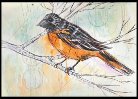 bird watercolor by thecarrierone