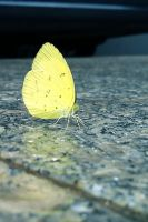 Yellow butterfly by lostspirit46