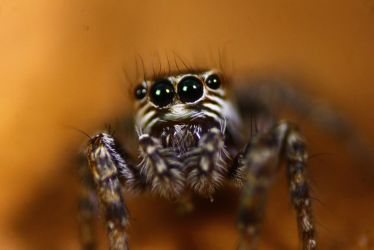 Mr Spider put his happy face on upside down by wild-images
