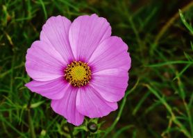 A FLOWER FOR ANDREA by Dieffi
