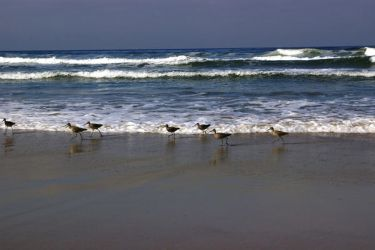 Sand Skippers by WaffleTopStock
