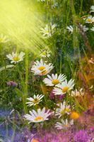 SUmmer dream II by Lucie-Lilly