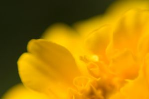 Yellow again by MaryAnnBubna