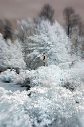 Infrared Lensbaby X by LDFranklin