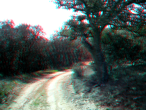 Path in the forest 3D anaglyph by korrosiv