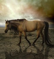 Desolate by taasia
