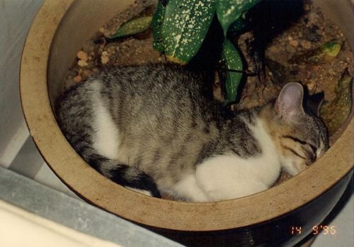 How to Grow a Cat ... by pergamjee