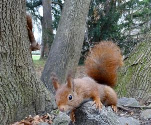 A question of perspective by Squirrels2poet2queen
