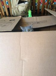 Gato in a box by VeronicaPrower