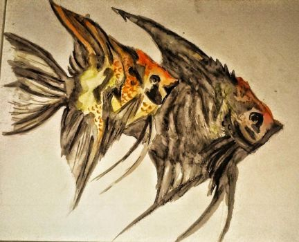 Angel fish watercolor ^^ by lallibear