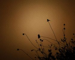 Nature Silhouette Flowers by magaxion