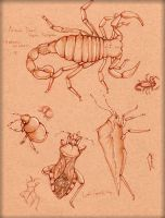 Insect Study 2 by LordMaru4U