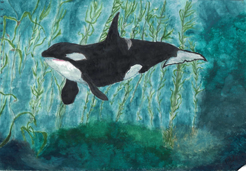 Orca - Watercolour by Free-Like-The-Wind