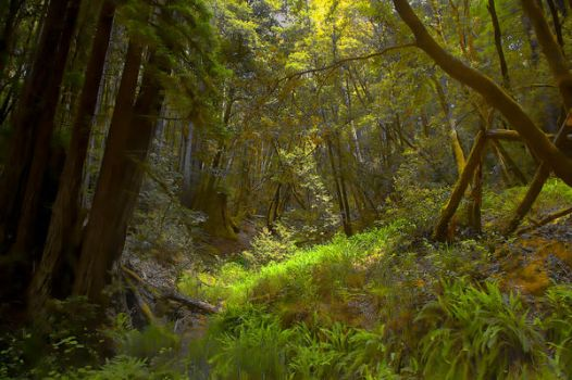 Mystic Forest Stock Background by little-spacey