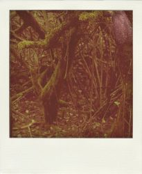 dead forest polaroid by LeaHenning