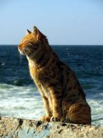 Alexandrian Cat by overmood