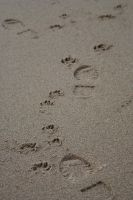 foot prints in the sand by bananarama96