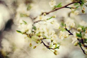 spring is here by Laura1995
