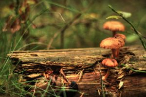 mushrooms... by Mark-Heather