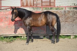 DWP FREE HORSE STOCK 207 by DancesWithPonies