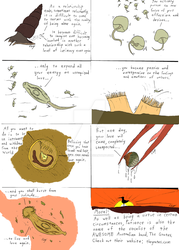 Acanthoparyphium life-cycle by The-Episiarch