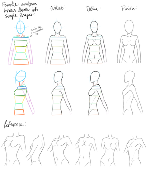 Female anatomy Reference by DeviantTear
