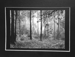 Forest by zeldis