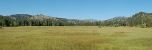 Pine and Featherville Meadow by eRality