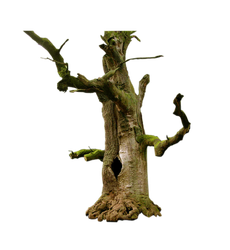 Old Tree PNG by Elysion28
