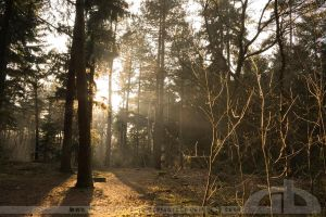 through the woods of madness by CrystalGraphic