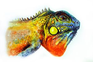 Colorful iguana watercolor painting by oanaunciuleanu