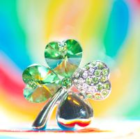Four colour clover by pqphotography