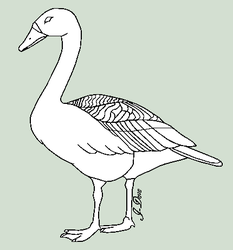 Swan or Goose Lineart by J-Dove