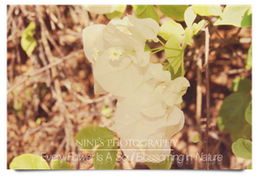 Flower Photography by carnine9
