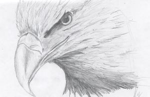 Eagle by Starless-Night