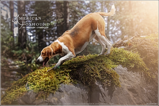 American Foxhounds by Zephyr and Zodiaque by xxELUHFUNT
