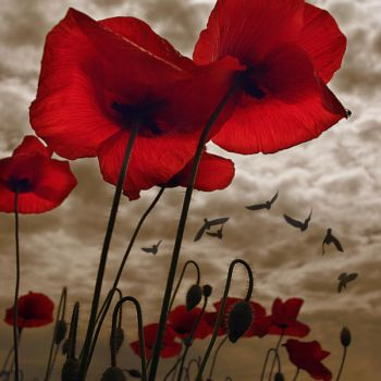 poppies and stormy mood by Floriandra