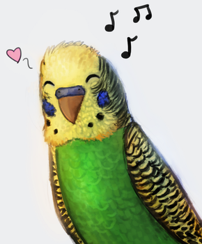 Budgie Doodle by Meep--Merp