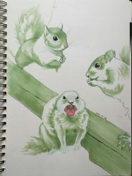 Sketch - Squirrels by maria-jaujou