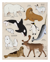 polar animals by Savkate