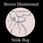 Brown Marmorated Stink Bug, Insect Buddies series2 by UnicronHound