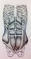 Front Abs/Obliques by BillyDoubleU