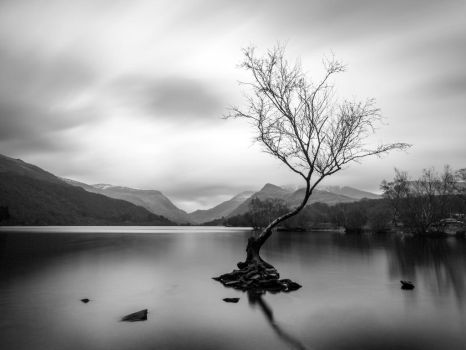 Lonely Tree by Dellboyy