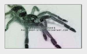Spiders by photoshop-stock
