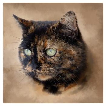 The Cat by photografever