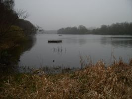 Derbyshire Nature Reserve by Isavarg