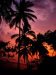 Colors of Paradise by nxxos