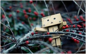 Danbo by i-Cube